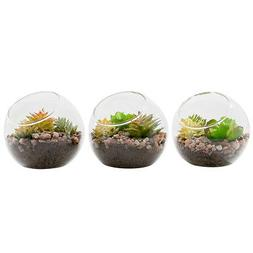 3 Pcs Plant Terrarium Display Glass Tabletop Air Plant Vase