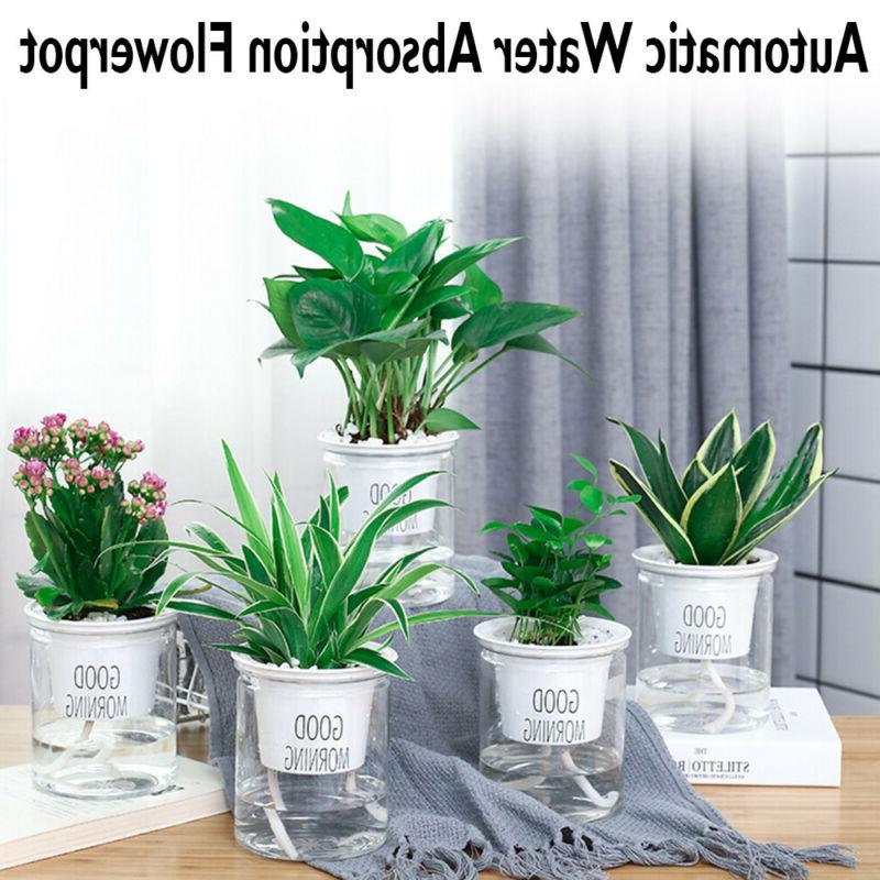 Clear Self Watering Pot Outdoor