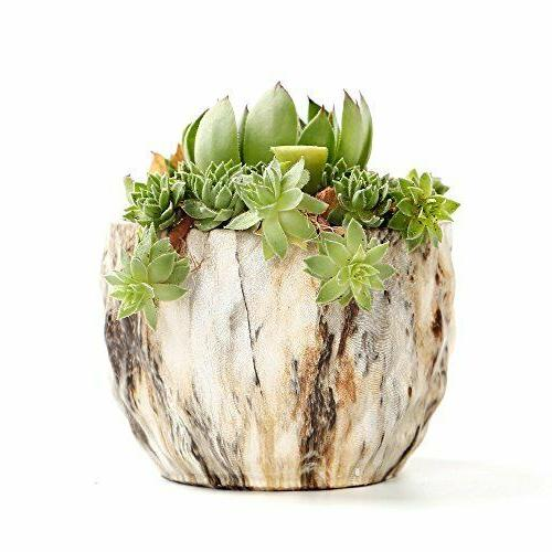 Marbling Succulent Pots Hole For Garden