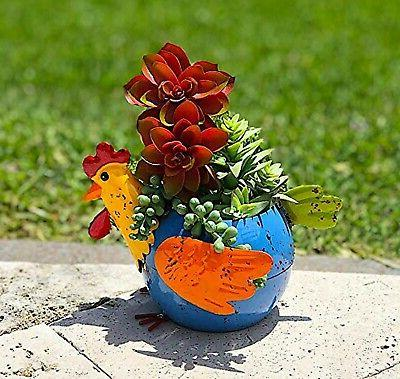 Chicken Colorful Succulent Flowers Living F...