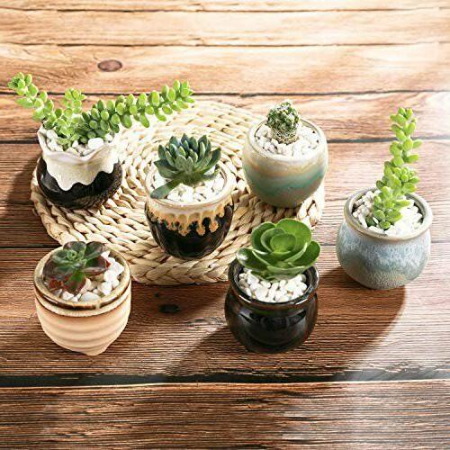 Succulent Planter Pots with Drainage of 6